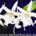 "Dgmra. Winter Wanderland ""White Fairy"""