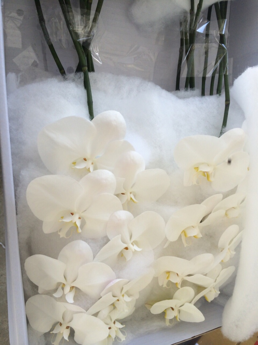 Fresh Cut Flowers Orchid Hub