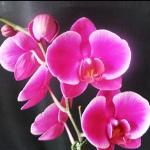 Dtps. Ruby Lih Beauty